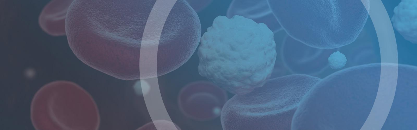 Hyperlipidämie – erhöhte Blutfettwerte